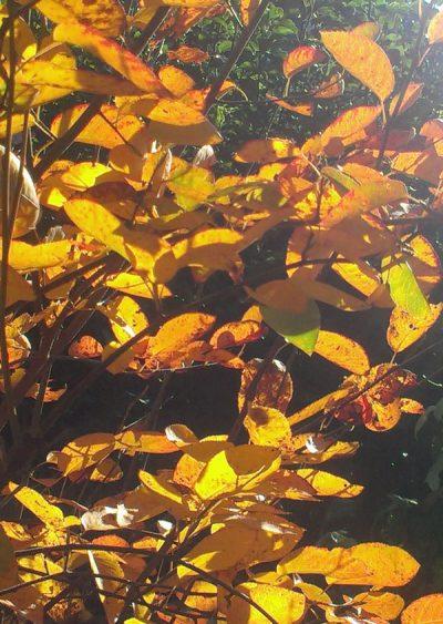 Herbst für die Seele … und für ein schönes Zuhause