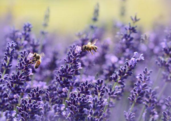Welcome July…. kennst Du schon Lavendelzucker?